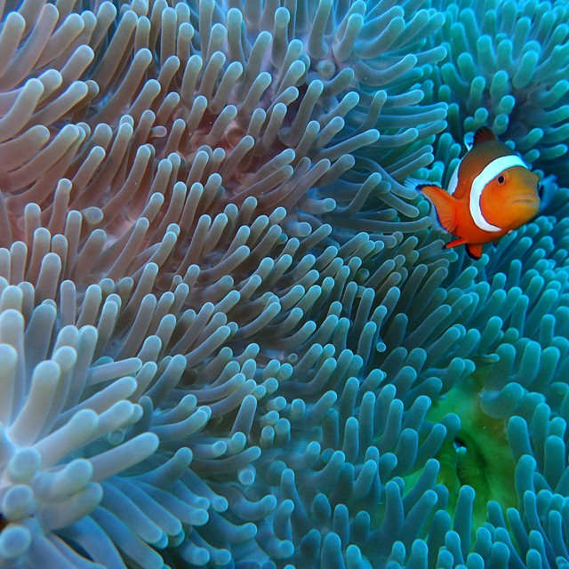 Nemo~~~