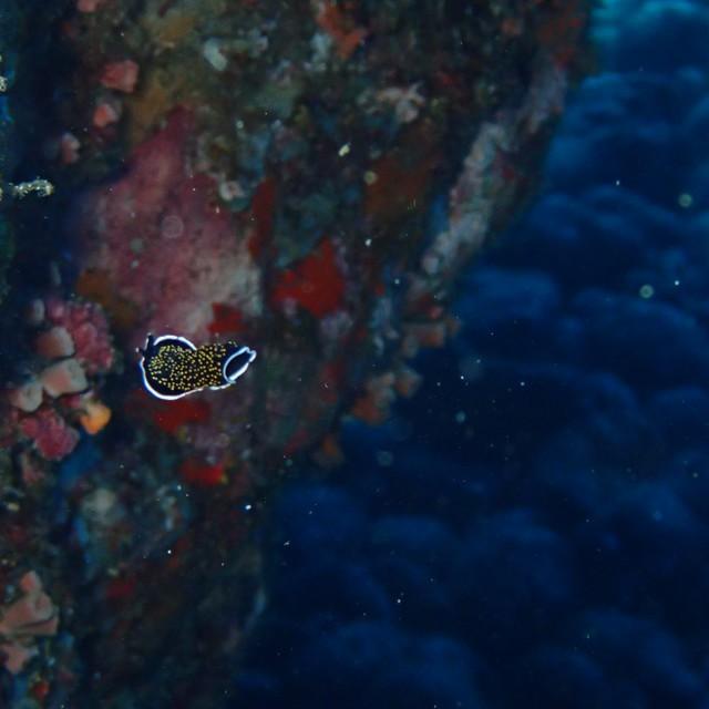媽!有海蛞蝓在游泳!!
