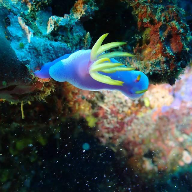 雖然是常見的高澤海蛞蝓,但我自己覺得這張好漂亮!