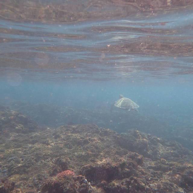 才剛要下水就被一隻海龜嚇到