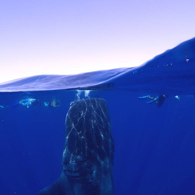 Whale Shark bottling!  Olym TG4 with UWL04 fisheye lense.  great day with diveislamujeres.com