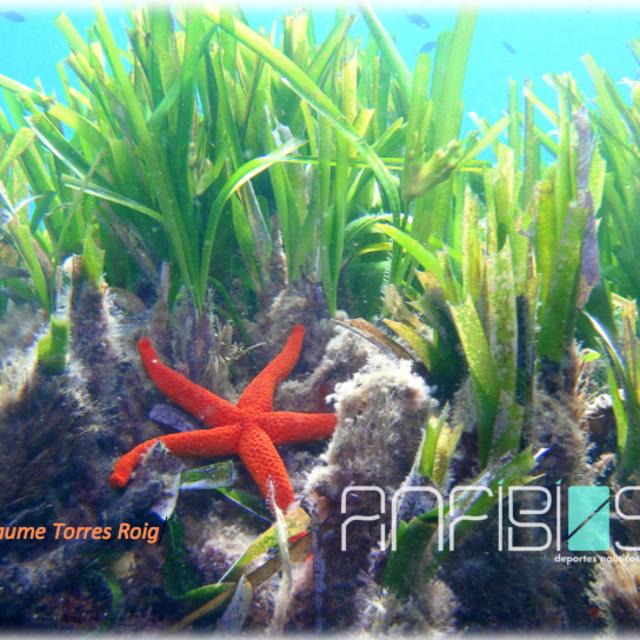 Fondo de Posidonia oceánica