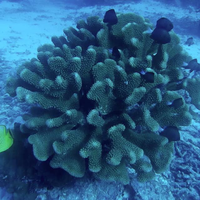 fabulous coral blob